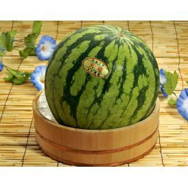 木村さんの『天竜』スイカ 神奈川県産 1玉 7~8L(12kgUP)※冷蔵 送料無料