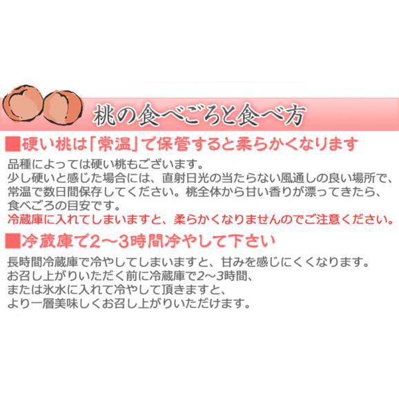 【豊洲出荷】JAふくしま未来 福島県産 「伊達の桃」 特秀品 大玉 約1.7kg×2箱 (1箱:5~6玉) ※常温 送料無料04