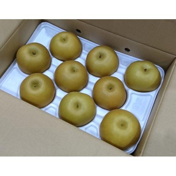 熊本県産 『あきづき梨』 約5kg(8~16玉) 秀品 ※冷蔵 送料無料03