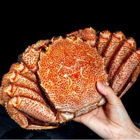 北海道産 超特大 毛蟹 ボイル済み・堅蟹 1尾 約1kg ※冷凍 送料無料