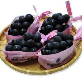 長野県産 ぶどう 『ナガノパープル』 4房 (合計 約1.6kg) ※冷蔵 送料無料
