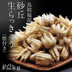 らっきょ ラッキョウ 鳥取県福部町産 砂丘らっきょう(根付き) M-Lサイズ 約2kg 冷蔵 簡易包装