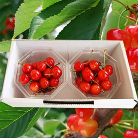 佐藤錦の発祥の地で、果樹栽培が大変盛んな山形県東根市の果樹園より発送いたします。