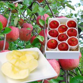 完熟になってから、蜜入りを見極めて収穫!甘みたっぷりのふじりんご。