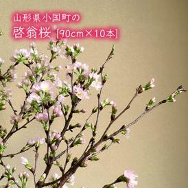 小国町の啓翁桜[約90cm×10本]