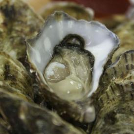 アイリッシュプレミアム殻付牡蠣 【Mサイズ 24個入り】