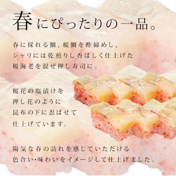 【春季限定】さくら並木03