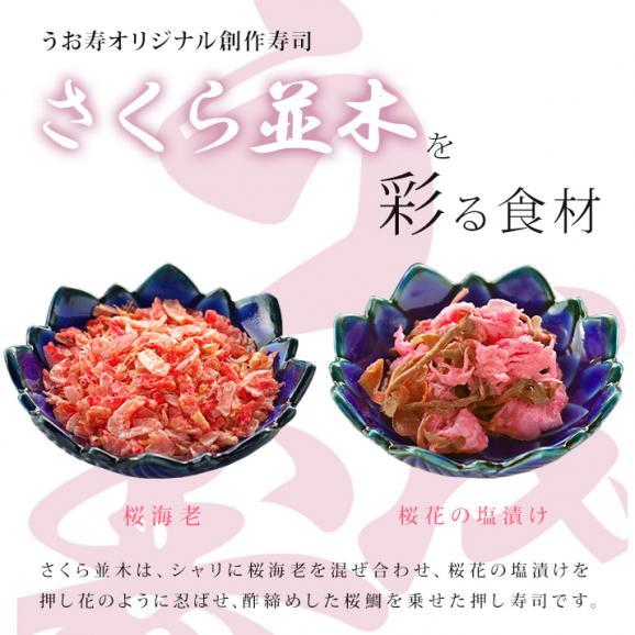 【春季限定】さくら並木04