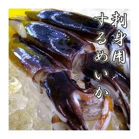 新物刺身用 スルメイカ 【北海道日本海 瞬間冷凍】 中サイズ 1本