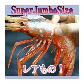 ぼたんえび・SPサイズ 500g(7~8尾前後)