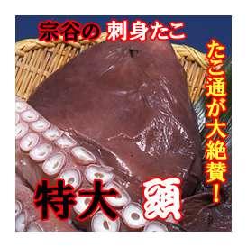 刺身たこ頭 1玉 (750~900g前後) 宗谷産