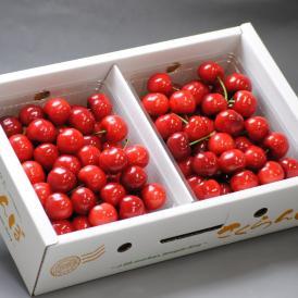産地直送 紅さやか さくらんぼ 約1kg Mサイズ 山形県産 秀品 露地栽培 贈答品 酸味と高い糖度が魅力の爽やかな味!鮮度抜群のギフトフルーツ