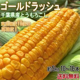 とうもろこし ゴールドラッシュ中心 10~16本 約5kg 千葉県産中心 大房厳選 生で食べられる高糖度トウモロコシ!
