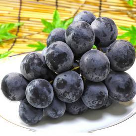 送料無料 食べやすさと高い糖度が魅力のギフト果物!