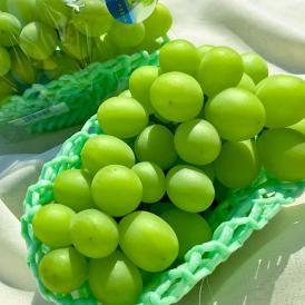 送料無料 最高級の白葡萄、シャインマスカット!ギフト最適