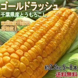 とうもろこし ゴールドラッシュ中心 5~8本 約2.5kg 千葉県産中心 大房厳選 生で食べられる高糖度トウモロコシ!
