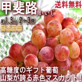 甲斐路 かいじ 約1.5kg 2~3房 秀品 山梨県産 贈答品 山梨が誇る代表品種の赤いマスカット!皮ごと食べられる高糖度の赤葡萄
