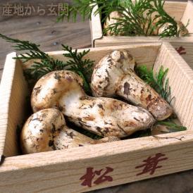 松茸 まつたけ カナダ産 約300g 4~6本前後 簡易包装 海外産の中でも優れた香りと味わい、カナダ産の松茸!