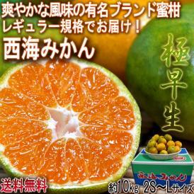 極早生 西海みかん 約10kg 2S~Lサイズ 長崎県産 JA全農ながさき 贈答可能 爽やかな風味の有名ブランド蜜柑!