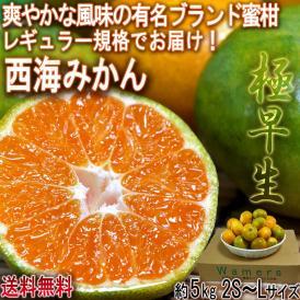極早生 西海みかん 約5kg 2S~Lサイズ 長崎県産 JA全農ながさき 贈答可能 爽やかな風味の有名ブランド蜜柑!