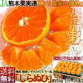 不知火 しらぬい 約5kg 15〜24玉 熊本県産 贈答規格 JAくまもと 濃厚な甘さと程よい酸味の人気品種!本場で育てた抜群の味