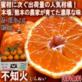 不知火 しらぬい 約5kg M~2Lサイズ中心 熊本県産 個人農家産 加温栽培 熊本県で育てた本場の味わい!デコポンと同品種のタンゴール