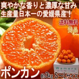 ポンカン 約3kg S~Lサイズ中心 愛媛県産 秀品 贈答可能 控えめな酸味と手で剥ける果皮!香りと甘み豊かな愛媛自慢の柑橘