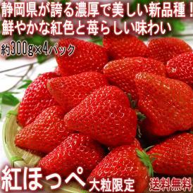 紅ほっぺ いちご 約300g×4パック 静岡県・茨城県産 大粒限定 JA共撰品 濃厚な味わいと風味の苺!確かな実績で期待の新品種