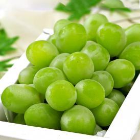 送料無料 ブドウの女王と呼ばれる濃厚な甘さの高級フルーツ!