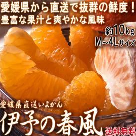 産地直送 伊予の春風 いよかん 約10kg M~4Lサイズ 愛媛県産 伊予柑の出荷量全国一位の愛媛より直送!縁起の良い爽やかな甘さのフルーツ