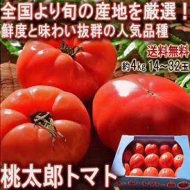 桃太郎トマト 約4kg 14~32玉 千葉・茨城県産中心 産地厳選 旬の産地で育てた抜群の味!締まった果肉にジューシーな食感の人気品種