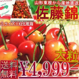 送料無料 日本一のサクランボ産地、山形で育った抜群の美味しさ
