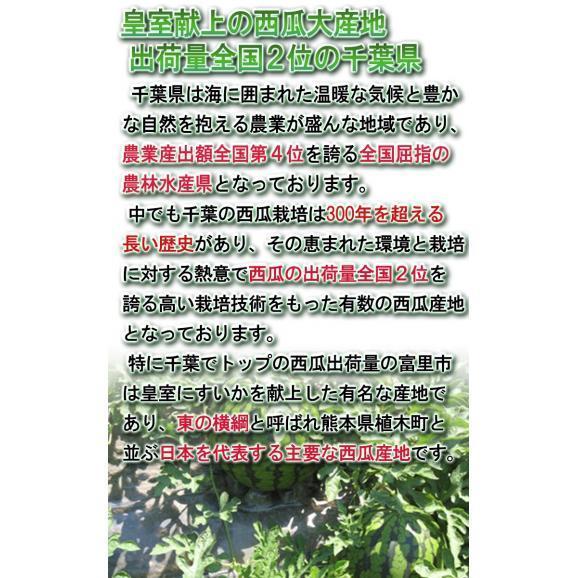 ブラックジャック 種無し西瓜 1玉 約5~7kg 千葉県産 贈答規格 黒皮の果実に抜群の味!地域ブランドの富里産中心03