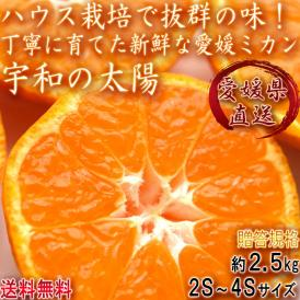 産地直送 宇和の太陽 ハウス蜜柑 約2.5kg 2S~4Sサイズ 愛媛県産 贈答規格 ミカンの本場で育てた抜群の味と鮮度!小玉限定のギフトみかん