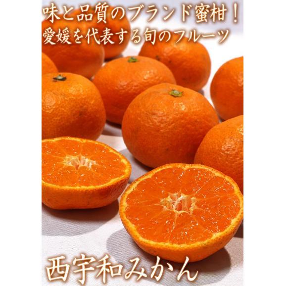 西宇和みかん 温州ミカン 約10kg S~2Lサイズ 愛媛県産 JAにしうわ 県を代表する地域ブランドの蜜柑!02