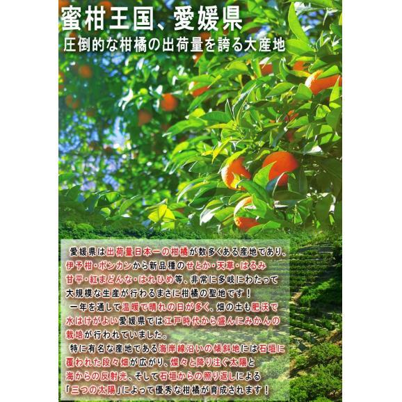 西宇和みかん 温州ミカン 約10kg S~2Lサイズ 愛媛県産 JAにしうわ 県を代表する地域ブランドの蜜柑!03