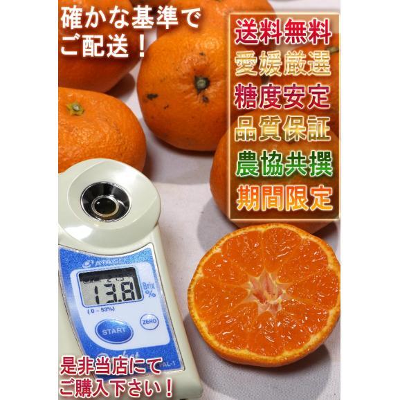 西宇和みかん 温州ミカン 約10kg S~2Lサイズ 愛媛県産 JAにしうわ 県を代表する地域ブランドの蜜柑!05