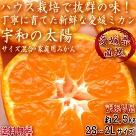 産地直送 宇和の太陽 ハウス蜜柑 約2.5kg サイズ混合 愛媛県産 訳あり品 ミカンの本場で育てた抜群の味と鮮度!お得な家庭用みかん