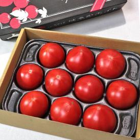 はるかエイト フルーツトマト 約1kg 8~15玉 北海道産 贈答規格 JA北はるか 糖度8度保証の贈答トマト!ギフト最適な特産品