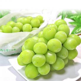 送料無料 抜群の味と食べやすさで人気の贈答ブドウ!