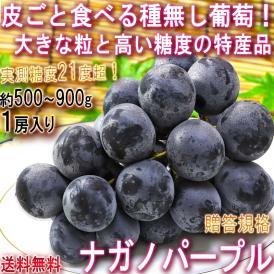 ナガノパープル 種無し葡萄 約500~900g 1房入り 長野県産 贈答規格 大房中心 JA共撰品 特産品の高級フルーツ!皮ごと食べる大粒の黒ぶどう