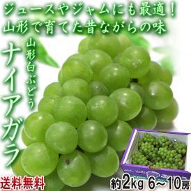 ナイアガラ 白ぶどう 約2kg 6~10房入り 山形県産 昔ながらの白葡萄!ジュースやジャムにも最適な希少品種