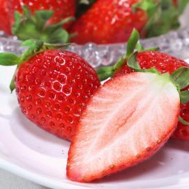 産地直送 やよいひめ いちご 280g×2パック 宮崎県産 贈答規格 酸味控えめで甘み豊かな新品種!