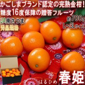 春姫 はるひめ 完熟きんかん 約700g L~3Lサイズ 鹿児島県産 秀品規格 JA南さつま 贈答品 温室栽培で育てた高糖度の金柑!