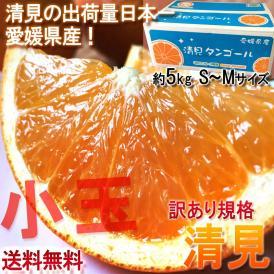 産地直送 清見オレンジ 約5kg S~Mサイズ 愛媛県産 訳あり品 小玉中心 出荷量日本一の愛媛県産!豊富な果汁とまろやかな甘さ