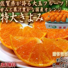 清見オレンジ 特大限定 きよみ 約5kg 9~14玉 佐賀県産 贈答規格 JA共撰品 豊富な果汁と甘さ!ギフト最適な大玉フルーツ