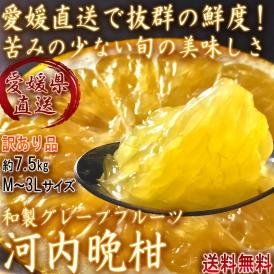 産地直送 河内晩柑 約7.5kg M~3Lサイズ 愛媛県産 訳あり品 苦みの少ない和製グレープフルーツ!お得な価格で本場の味をお届け