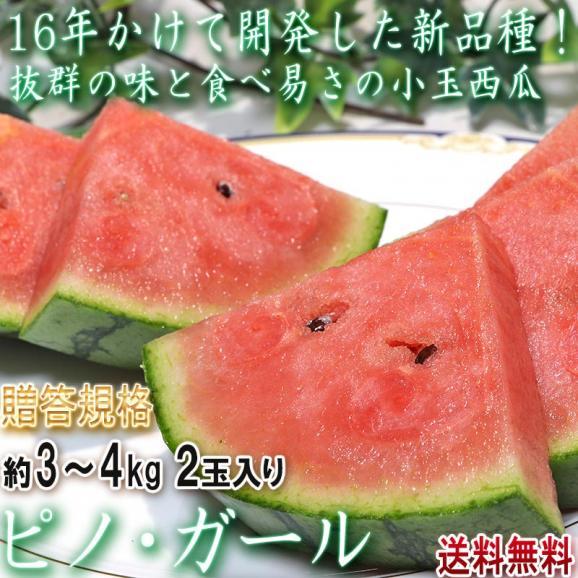 ピノ・ガール 小玉スイカ 約3~4kg 2玉 茨城県産 贈答規格 タネごと食べられる新品種!抜群の味と食べ易さ01
