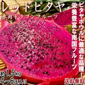 ドラゴンフルーツ ピタヤ 赤肉 約1.5~2kg 4~6玉 ベトナム産 ピタヤボウルに最適なレッドピタヤ!鮮やかな果肉に豊富な栄養