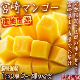 産地直送 宮崎マンゴー 樹上完熟 1玉 2~3Lサイズ 贈答規格 宮崎県産 とろける食感と濃厚な甘さ!直送で抜群の味と鮮度のギフト果物